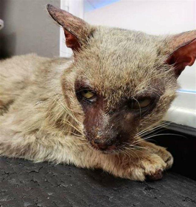 Люди сторонились устрашающего кота, но он просто нуждался в любви