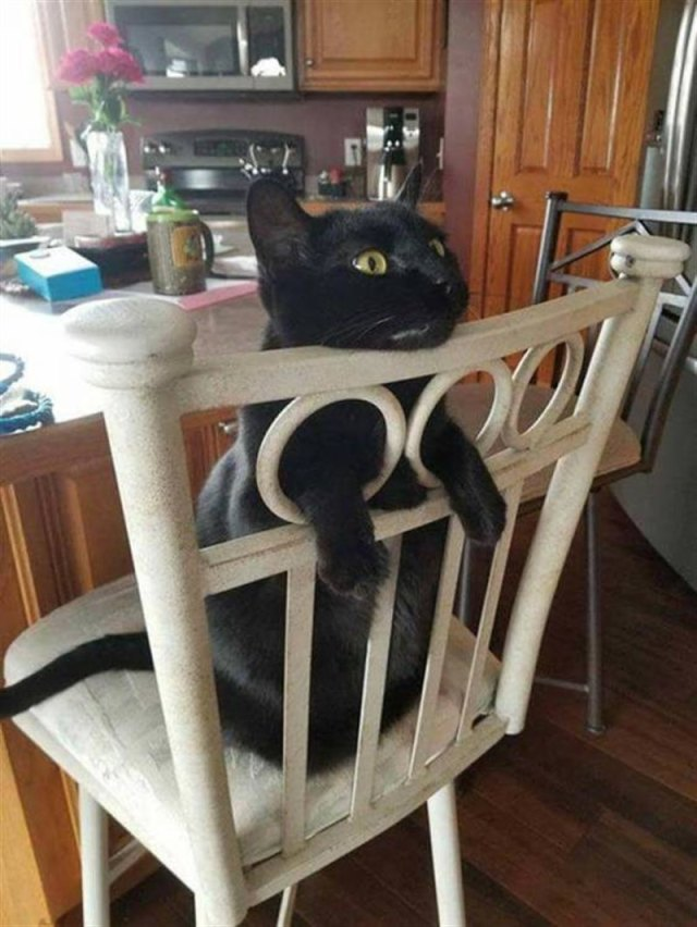 Веселый истории из кошачьей жизни