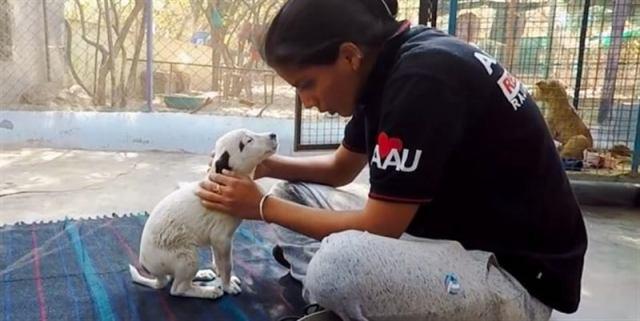 Собака отчаянно лаяла и звала людей на помощь, ведь погибал ее щенок
