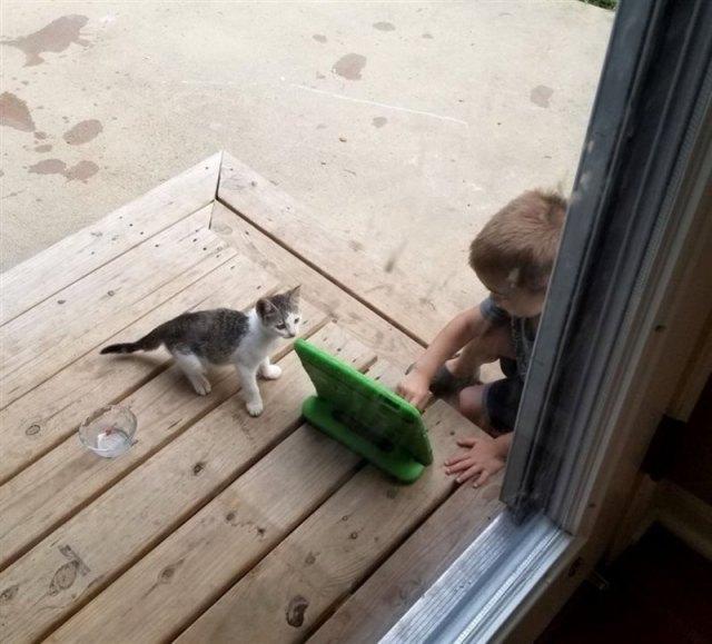 Жизнь уличного котёнка круто поменялась с тех пор, как он прокрался на двор одной семьи