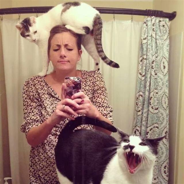 Котики, которые терпеть не могут селфи