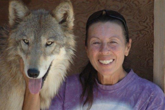 Однажды спасенные женщиной волчата сейчас превратились в красивых и гордых животных