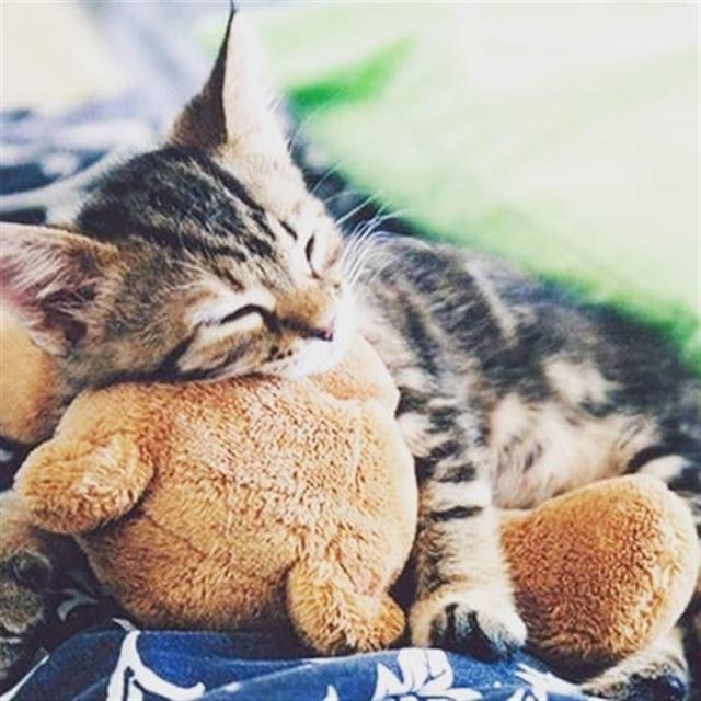 Забавные животные, которые неразлучны со своими любимыми игрушками