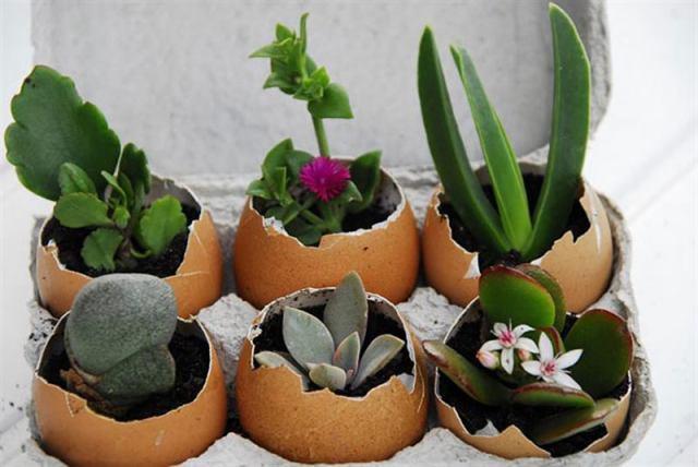 20 хитростей, которые превратят ваш сад в настоящий райский уголок