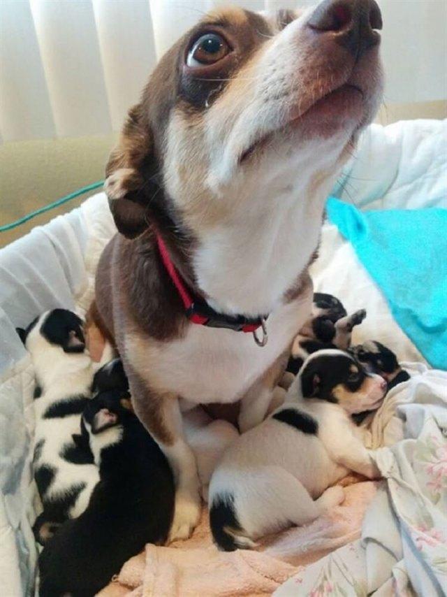 Милые мамы собаки со своими щеночками