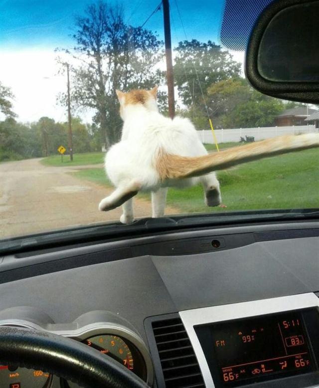 Неугомонные коты, которые постоянно преподносят хозяевам сюрпризы