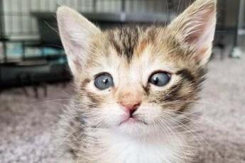 Котенок никому не нравился из-за косоглазия. Но один человек не обратил на это внимания, и его счастью нет предела