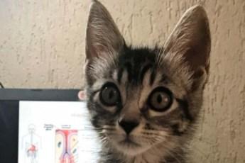 «В нашем доме не будет кота. Даю тебе два дня…»! Мама запретила оставлять котенка, но что-то пошло не по плану
