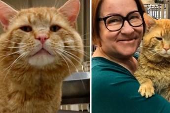 Этот котик, попавший в приют с улицы, удивил всех волонтеров своей способностью вести диалоги