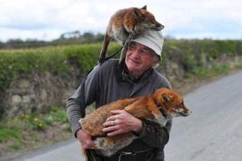 Милая любовь мужчины и двух лисиц, которых он спас