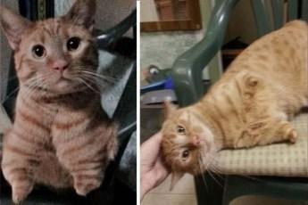 Рожденный лишь с двумя лапами кот был спасен с улиц Аризоны