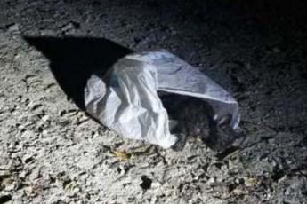В Индиане спасли и выходили котенка, которого чуть живого выбросили в мусорном мешке