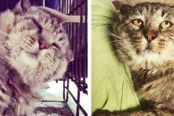 Потрепанный кот провел на улице 10 лет и наконец нашел себе дом
