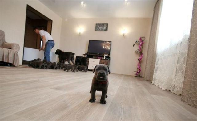 В Воронежской области собака родила 19 щенков и стала матерью-героиней