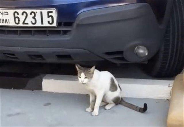 В Дубае бездомная кошка с сердечком на шерсти просила не еды, а ласки