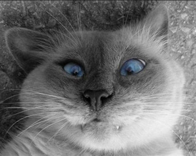 Самые забавные и очаровательные котики, которые обязательно вас развеселят