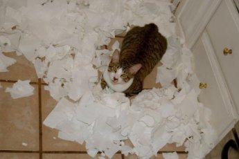 Обнаглели до ручки: котики, которые совсем совесть потеряли