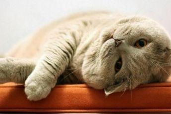 Как коты выражают свою любовь к хозяевам