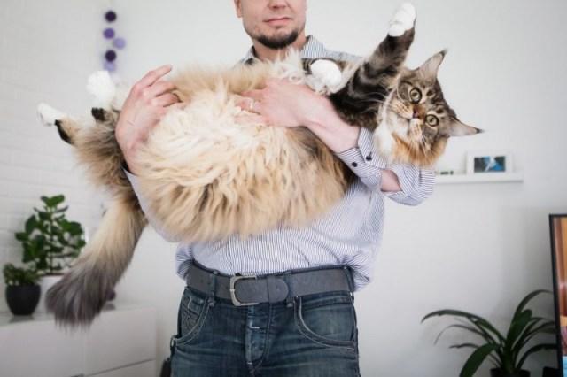 В Финляндии возможно живет самый крупный кот в мире