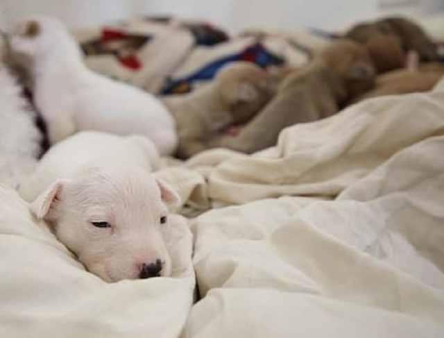 Отлучив от матери 12 беззащитных щенков, хозяин равнодушно бросил их на дороге