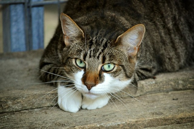 Как кошки воспринимают окружающий нас мир