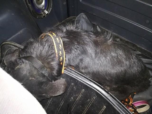 Люди спасли собаку, которая месяц просидела в колодце и каким то чудом выжила
