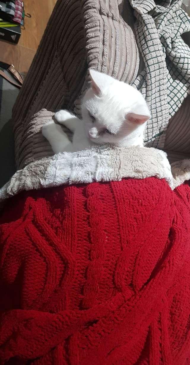 В драной картонной коробке жила кошка, которую предали. Но с наступлением зимы ее ждали перемены
