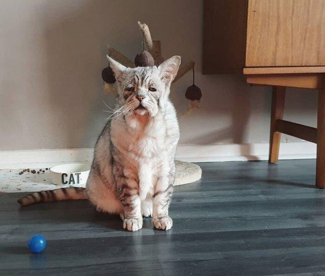 Котик с обвисшей кожей впервые узнал, что такое любовь