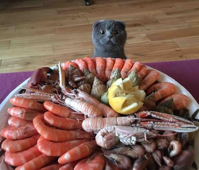 10 котов, которые готовы на все, лишь бы вкусненько поесть