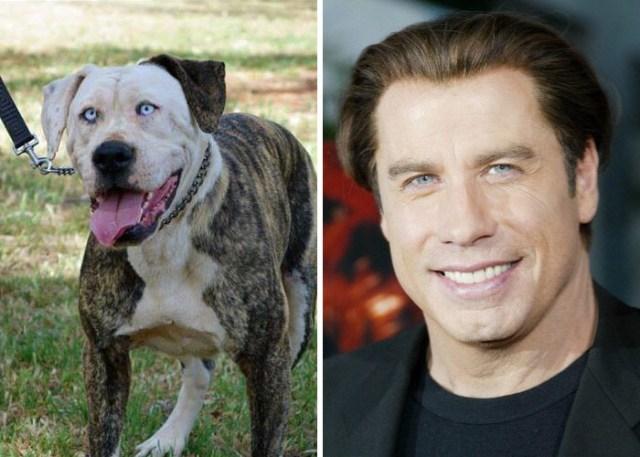 Знаменитости и их четвероногие друзья - на каких собак похожи известные артисты