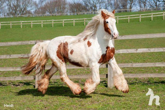 Лошадь посчитали «безнадежной», но она поправилась и стала удивительной красавицей