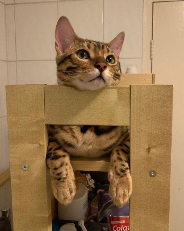10 умилительных фото кошек, которые жизни не представляют без своих владельцев