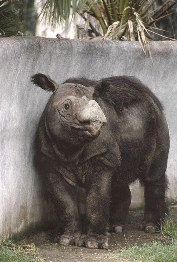 «Ничего себе!». Удивительные создания, которые обитают на нашей планете