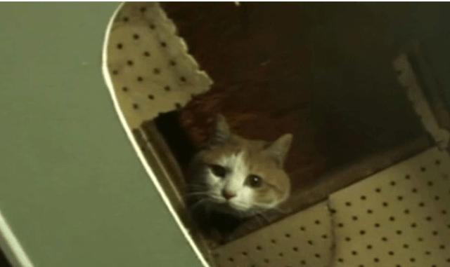 Люди сумели спасти кота, более 2-лет прожившего внутри стены торгового центра