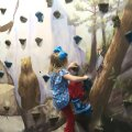 Rock Wall Climbing at CMOM