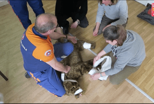 formation secours canins protection civile