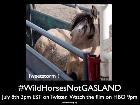 #WildHorsesNotGASLAND