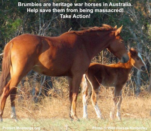 Cavalry horses left in Australia last century