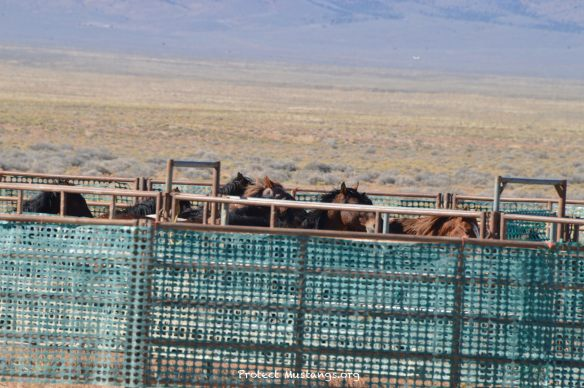 The War on Wild Horses