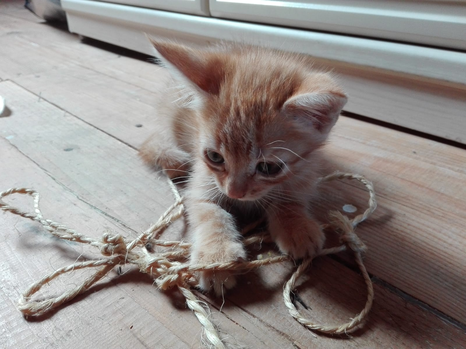 gato en adopción en la protectora de Jaca