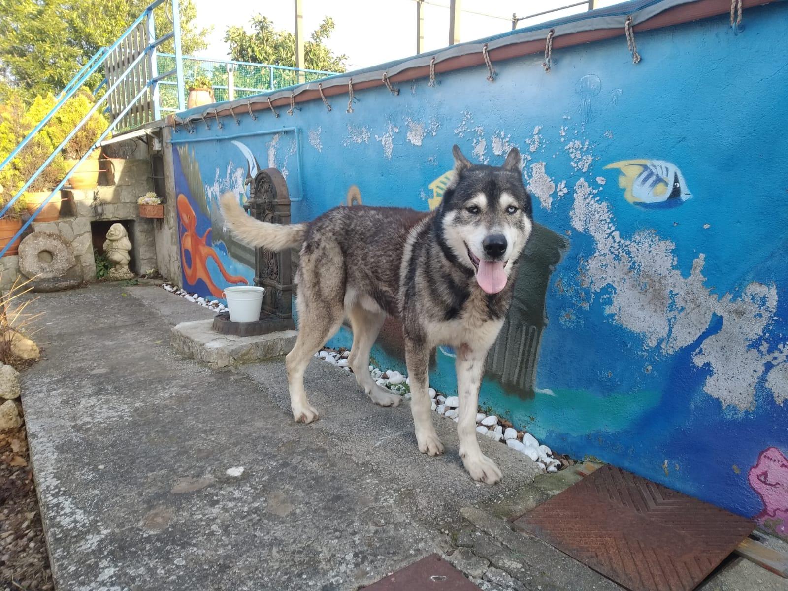 DRAGO RECUPERADO DIC/19 PERRO EN ADOPCIÓN EN PROTECTORA DE ANIMALES DE JACA 6
