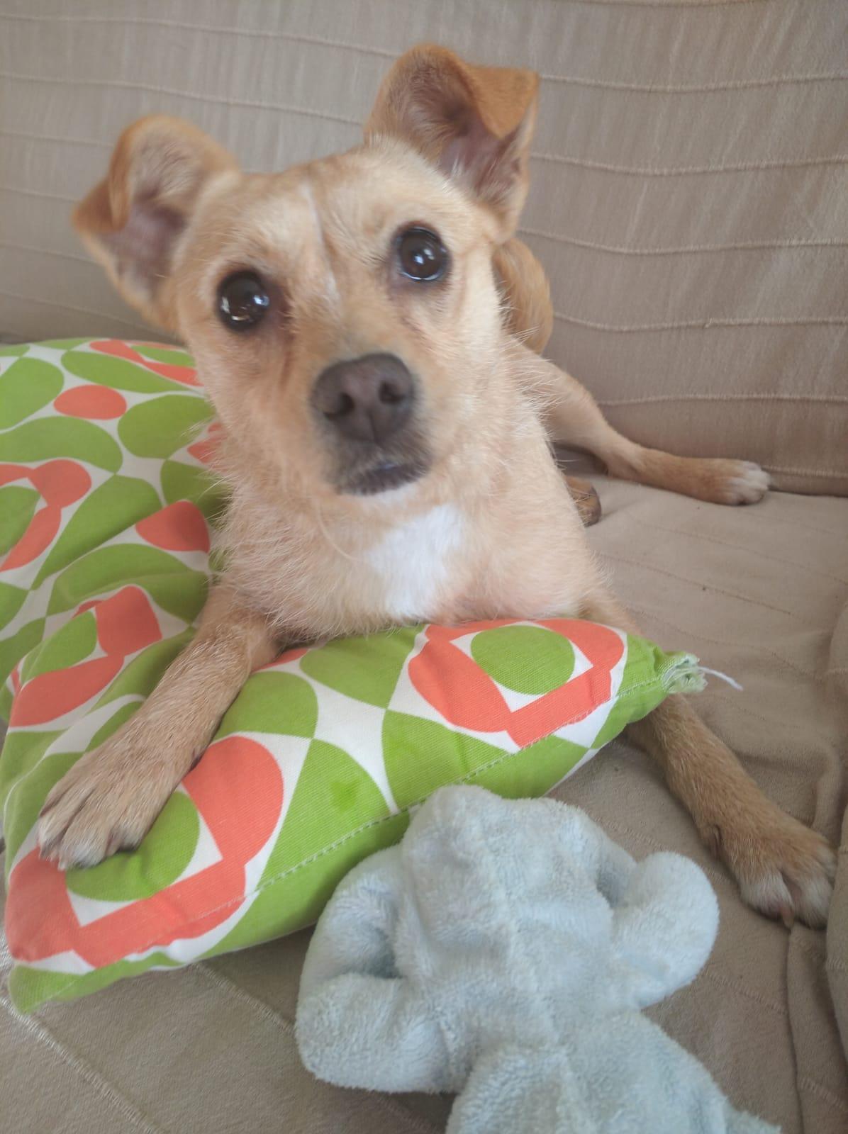 Cloe dic19 h perro en adopción en la protectora de animales de jaca