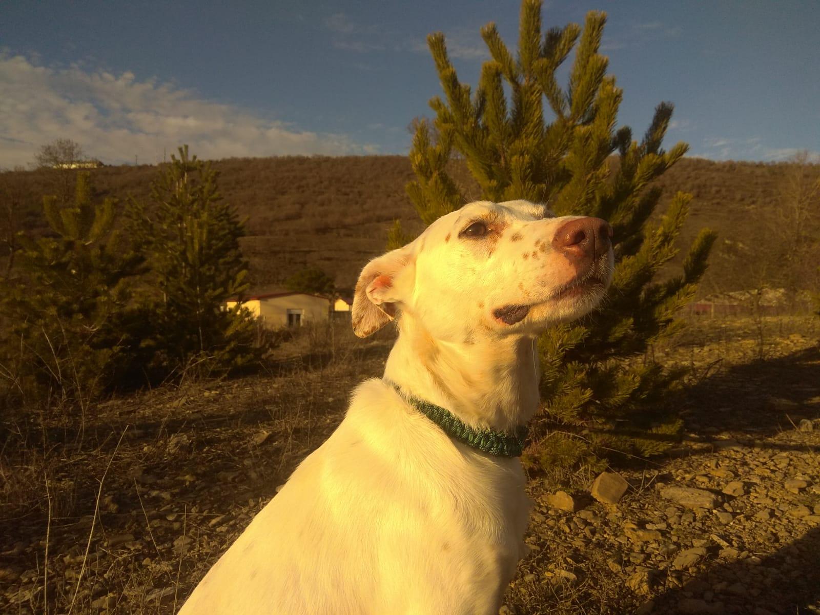PALOMO DIC19 perro en adopción en la protectora de Jaca APA Pirineos 141211