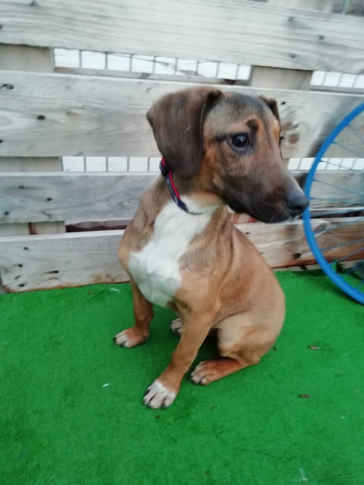 Perro en adopción en la protectora de Jaca. Albergue para animales abandonados. Si quieres adoptar: https://protectora-jaca.org/perros/