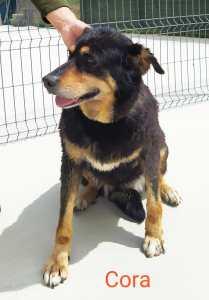 CORA perro en adopción en la protectora de Jaca