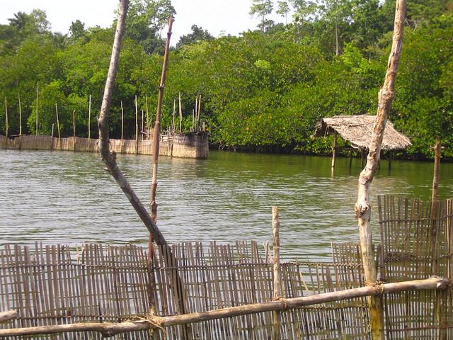 Prawn_farm_Sri_Lanka_by_Aidan_Jones_via_Flickr