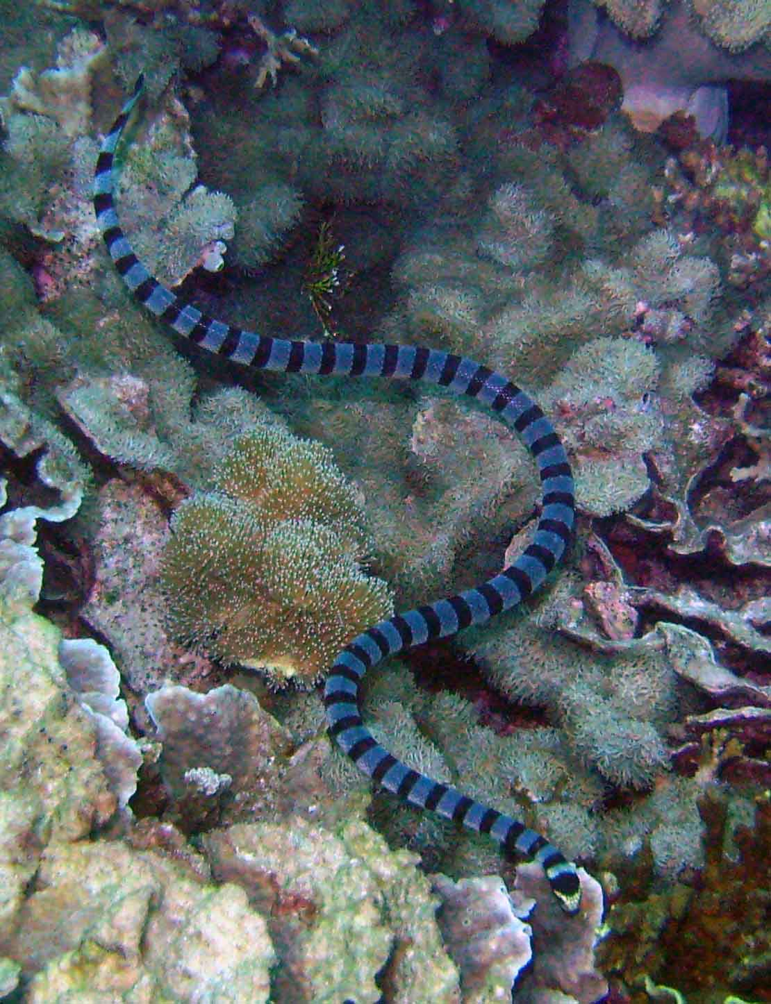 10 Fabulous Facts About Sea Snakes