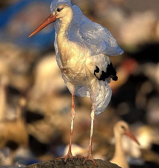 Are biodegradable plastics eco-friendly?