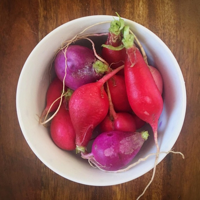 Radishes in Bowl