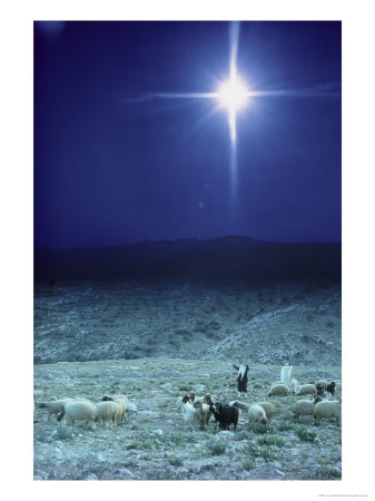 131218shepherds-watch-their-flocks-under-the-light-from-a-distant-star-near-bethlehem-israel-posters